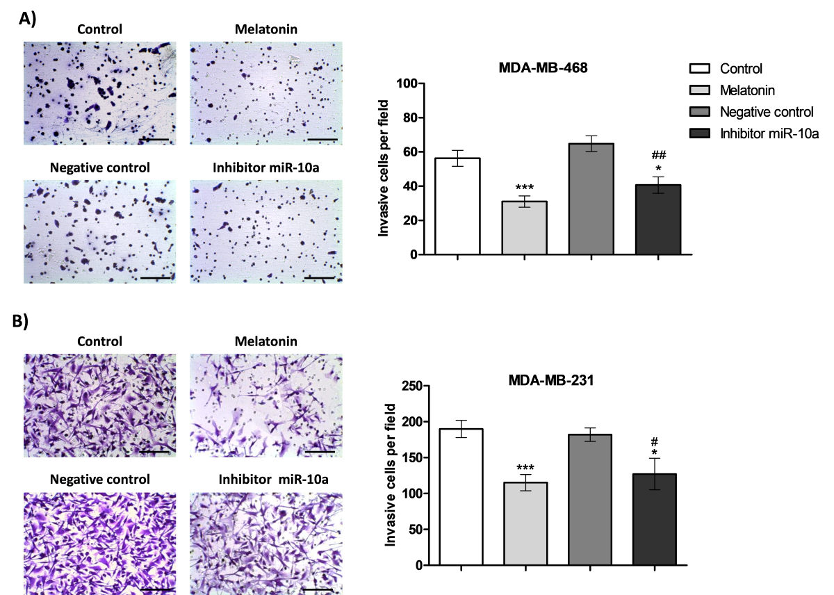 Melatonin down-regulates microRNA-10a and decreases invasion and