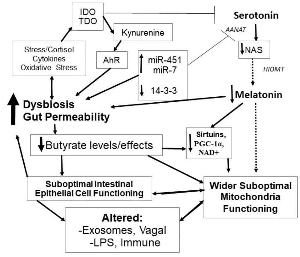 Please cite this paper as: Anderson, G  2019  Mitochondria