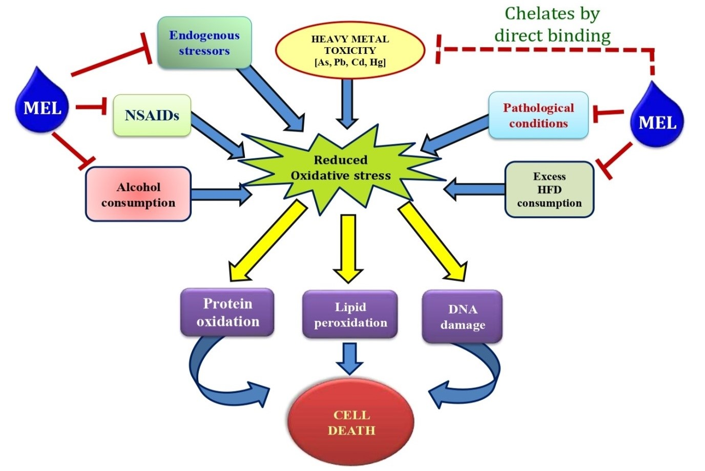 Pleiotropic roles of melatonin against oxidative stress